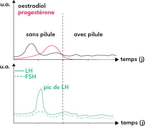 ovulation pilule